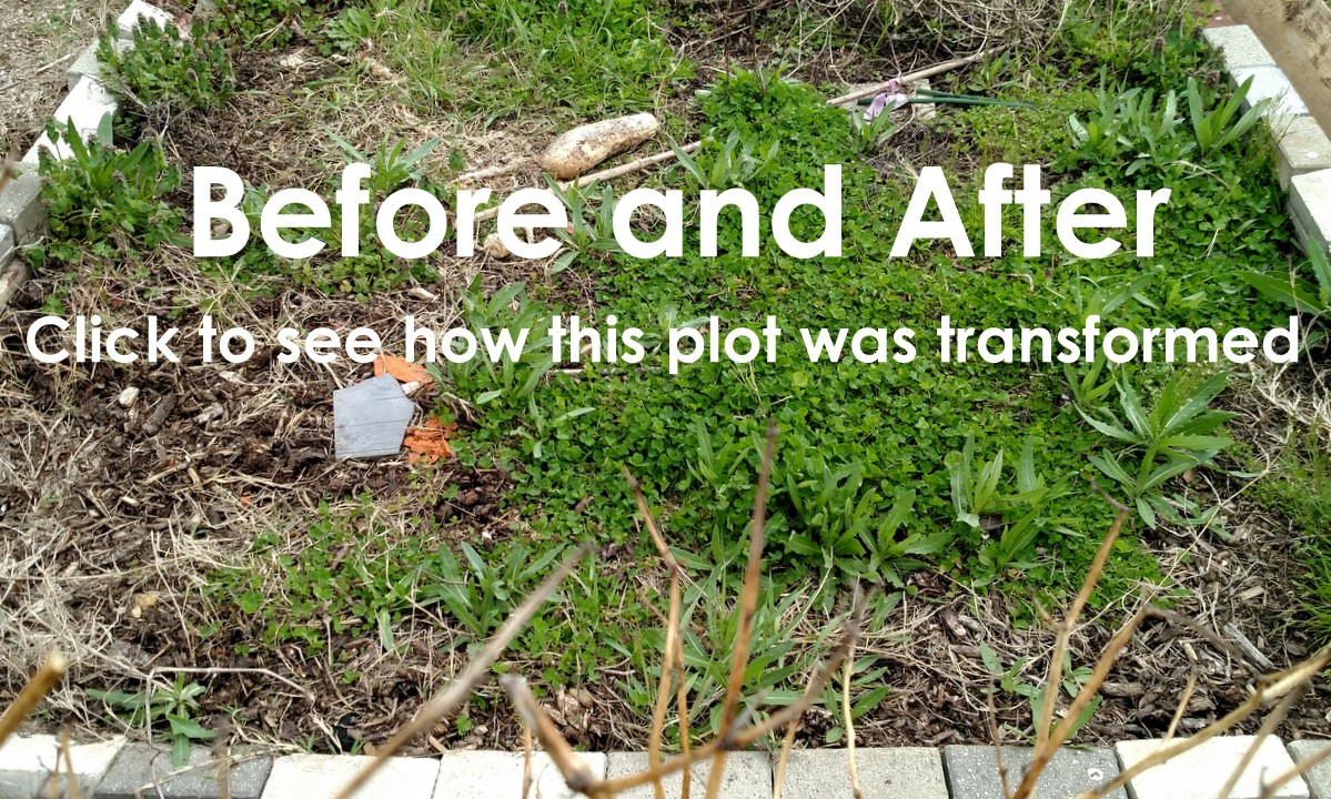 Before and After – Community Garden Plot