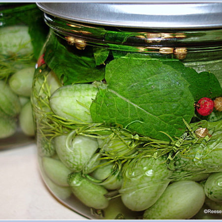 Glamorosi Cooks Cucamelon Refrigerator Pickles by Reese Amorosi
